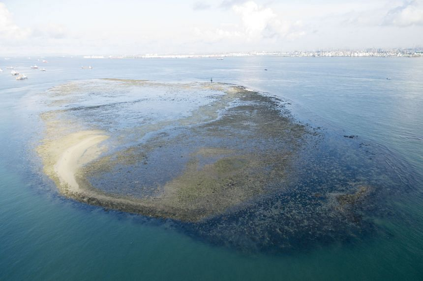 Low tide at Terumbu Pempang Laut, one of the Republic's largest submerged reefs, according to environmentalist Ria Tan. The reef, which lies near Jurong Island in the south of Singapore, has seagrass meadows and is home to animals like the fluted gia