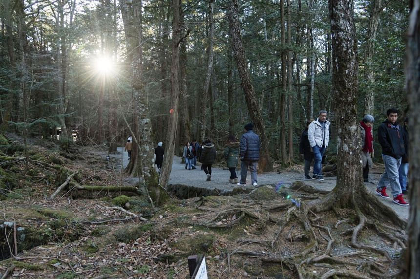 Visitors stroll on a well-marked path in the Aokigahara Forest, near Mount Fuji, Jan 4, 2018.