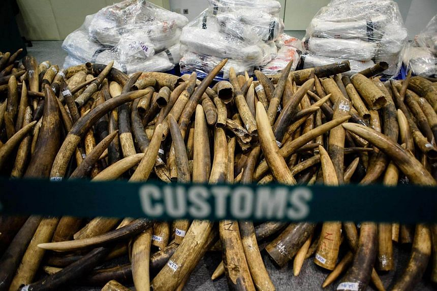Confiscated ivory tusks are displayed in Hong Kong after being seized by customs officials, on July 6, 2017.