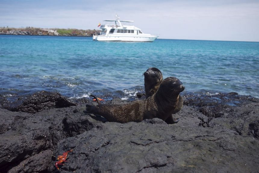The famed Galapagos is home to a thrilling variety of endemic wildlife, including giant tortoises, maring iguanas and sea lions (pictured), which apparently also shop at the local fishmonger.
