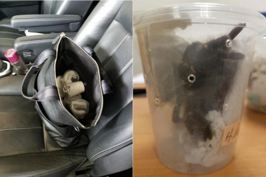 Six live tarantulas kept individually in containers in a sling bag were found on the rear passenger seat of a car driven by a 33-year-old Singaporean man.