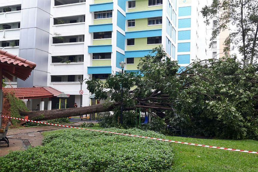 A huge tree uprooted and fell next to Block 147, Yishun Street 11 on Jan 11.