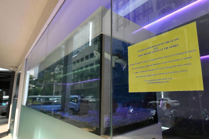 The three juvenile blacktip reef sharks in the aquarium at Braces & Implant Dental Centre in Tanjong Pagar, and a sign (below) urging visitors not to knock on the glass, as it could disturb the sharks.