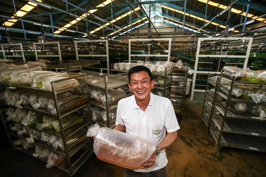 """Executive chairman and managing director Kenny Yap said the aquaculture business, or edible fish farm business, has """"contributed positively"""" to revenue and earnings since the third quarter last year."""