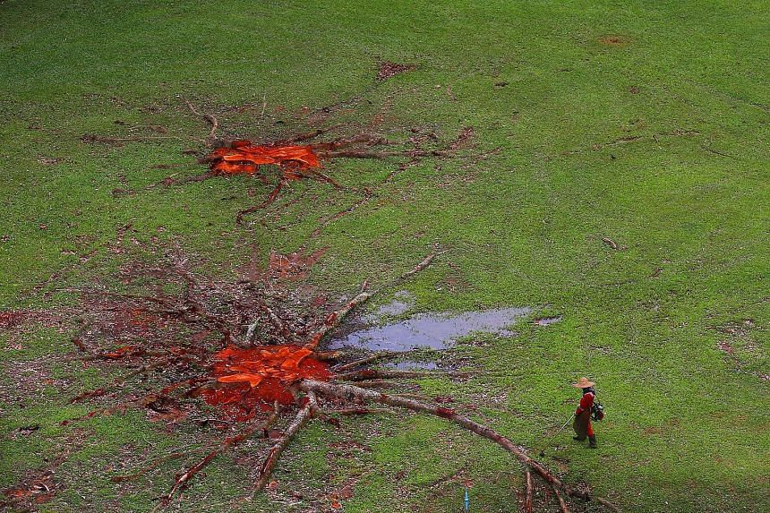 Over the past year, trees around the island have been cut down, as the authorities weed out those deemed unhealthy, or to clear the way for new developments.