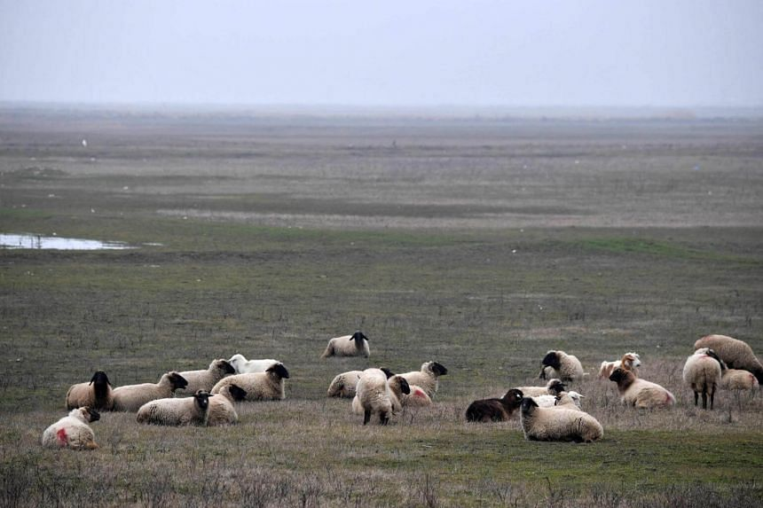 Sheep in a field near the US Deveselu military base that is hosting an anti-missile shield in the village of Stoenesti, southern Romania.