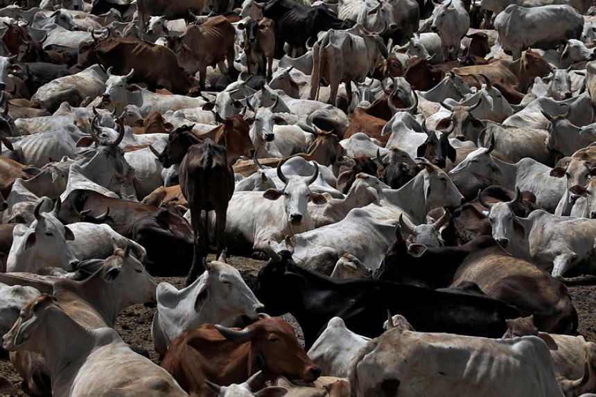 A new radical rehabilitation programme for inmates across India's Haryana state will involve rearing cows.