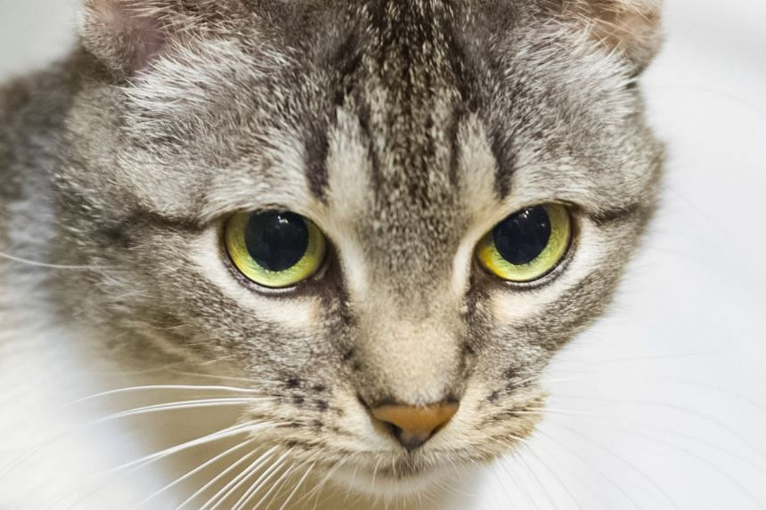 """There has been a growing trend in China called """"cat-sniffing"""", where cat owners smell and cuddle their cats, often multiple times a day."""