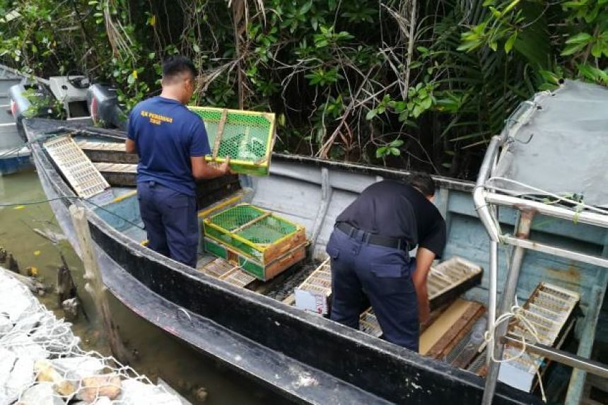 A trio were attempting to smuggle about 300 birds, including the near-extinct Javanese chirping bird into Indonesia.