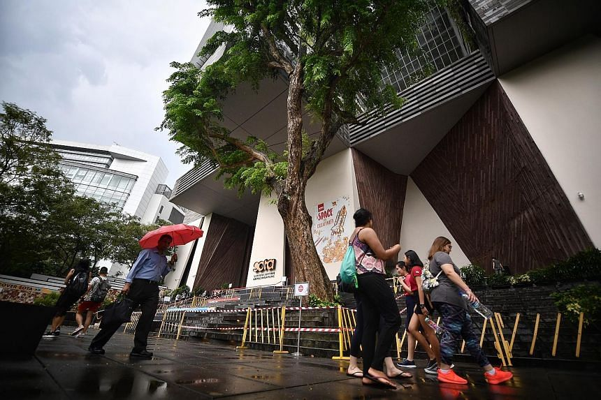 """The decaying """"Tree of Knowledge"""" outside the School of the Arts (Sota) in Dhoby Ghaut was felled yesterday afternoon. The 33.6m-tall Angsana tree (left) was estimated to be about 40 years old. When Sota was built eight years ago, care was made to inc"""