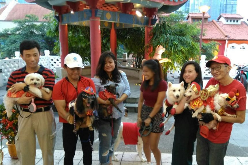 Dog owners and their costumed pets posing for a picture in Chinatown, on Jan 23, 20178.
