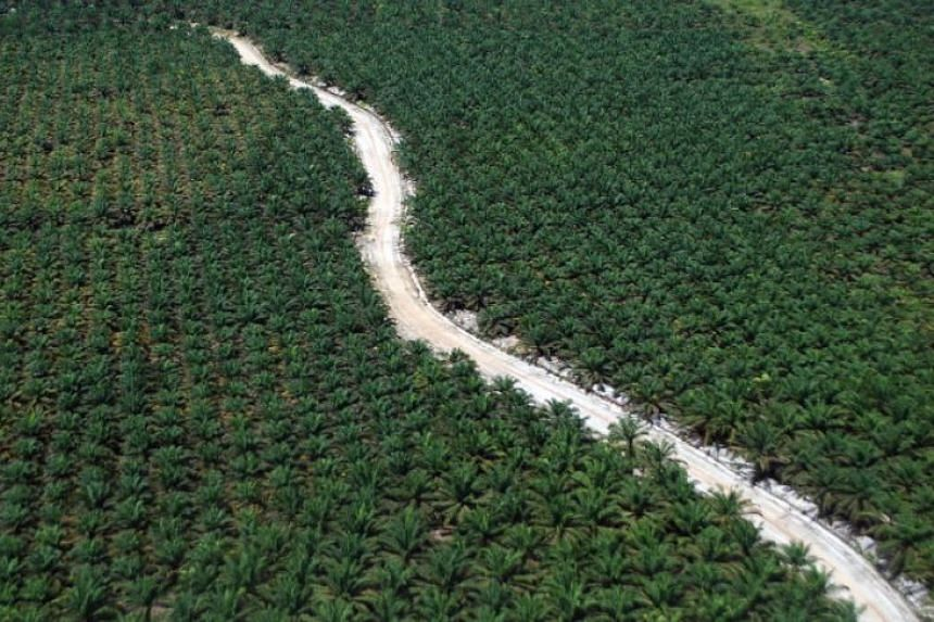 Indonesia is the world's largest palm oil producer but it has been regularly linked to the destruction of rainforests and wildlife habitats, as well as displacement of indigenous communities.