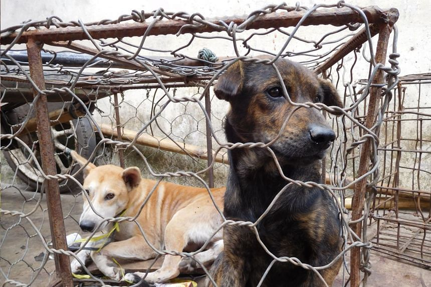 Dogs in a cage waiting to be sold at the Langowan market in north Sulawesi, on Jan 24, 2018.