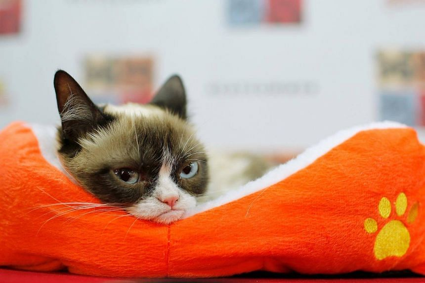 The famously moody-looking cat, Grumpy Cat, has won US$710,000 (S$930,000) in court.