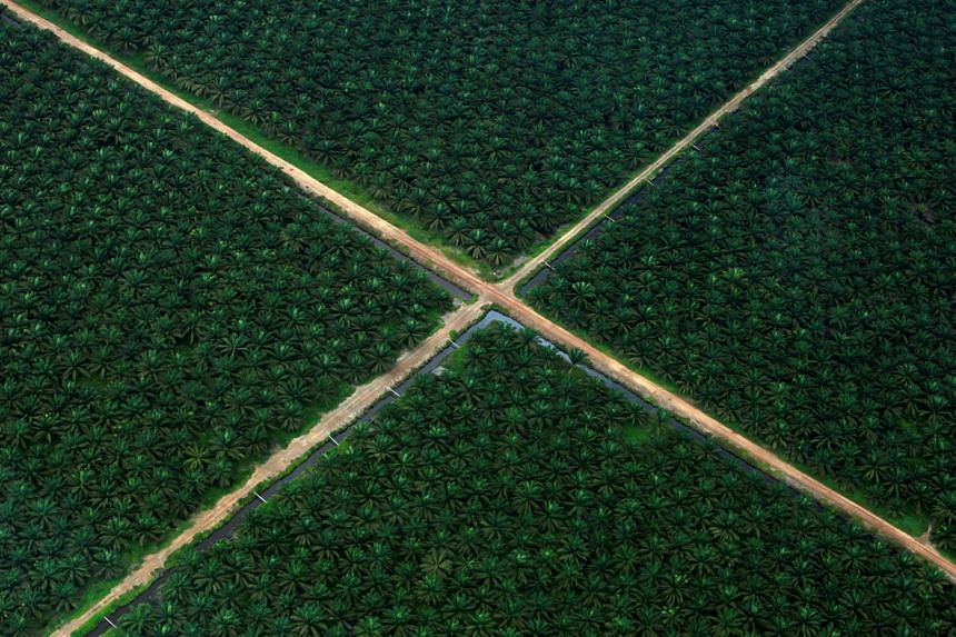 A palm oil plantation in Indonesia's South Sumatra province.