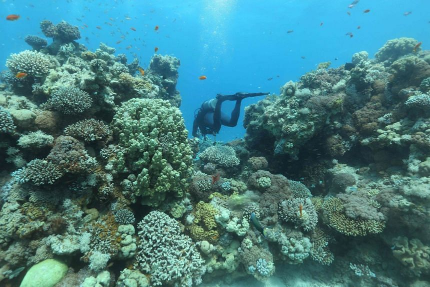 A ranger in the Great Barrier Reef region for the Queensland Parks and Wildlife Service takes photographs and notes during an inspection of the reef's condition.