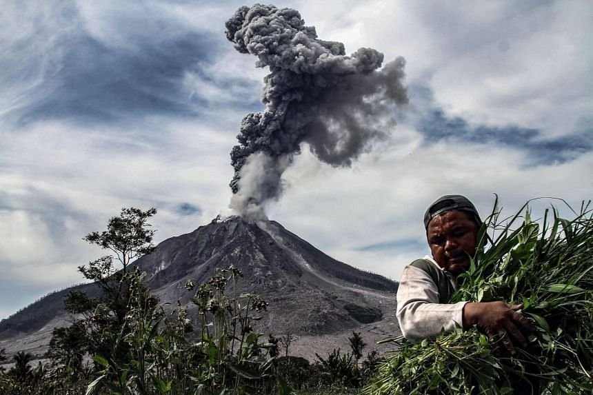 Mount Sinabung spewing thick smoke in Karo, in Indonesia's North Sumatra, on Jan 6 as a farmer harvests his vegetables.
