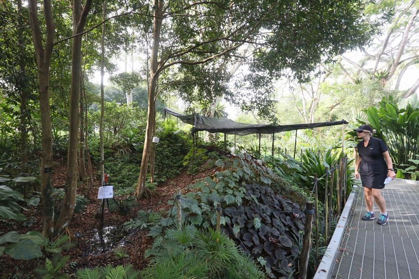 A Bangladeshi worker was initially fined for plucking the leaves of a tree at the Singapore Botanic Gardens earlier in January.