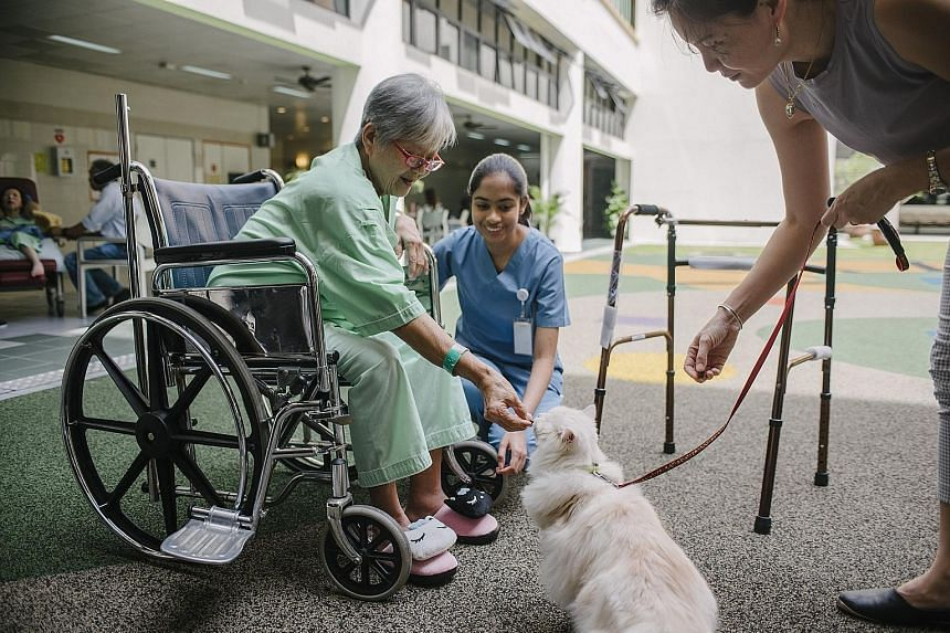 Madam Poh Poh Choo, 72, a patient at Ang Mo Kio-Thye Hua Kwan Hospital, feeding a cat during a therapy session, with encouragement from the cat's owner Leanne Teo, 47, and Ms Gelena Anandarajah.