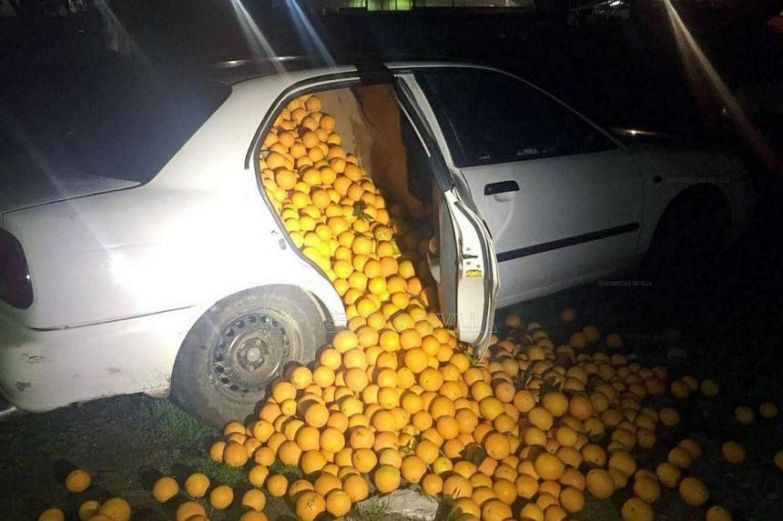 Oranges spilling out from a car that was stopped by police, after the fruit was stolen from a processing plant in Seville, Spain, on Jan 26, 2018.