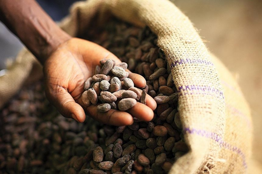 Olam sources cocoa beans in Africa, Asia and South America and processes about 700,000 tonnes of cocoa powder, liquor and butter in 12 facilities worldwide.