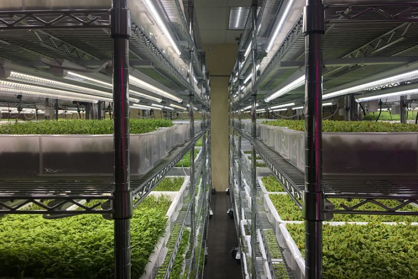 Farm deLight stacks its plants on multiple layers and grows them indoors using high-tech methods like artificial lighting to provide an optimal growth environment. Its combined proposal with KG Farm was one of the winning submissions for the land ten