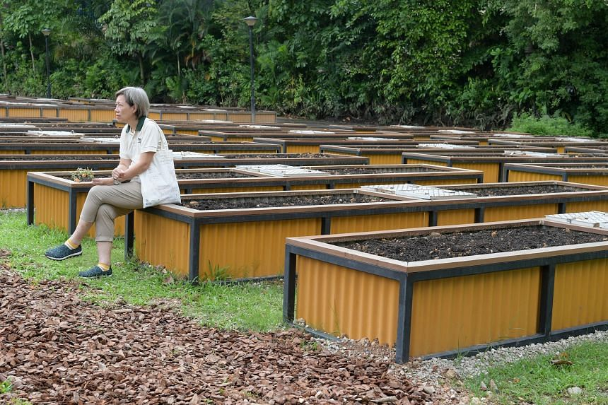 Allotment garden plots at HortPark. Allotment gardening plots at five other parks around Singapore were taken up when it was opened for registration on Feb 10, 2018.