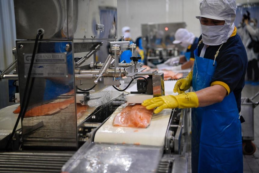 A worker at Song Fish passing a fish fillet through a deboning machine.