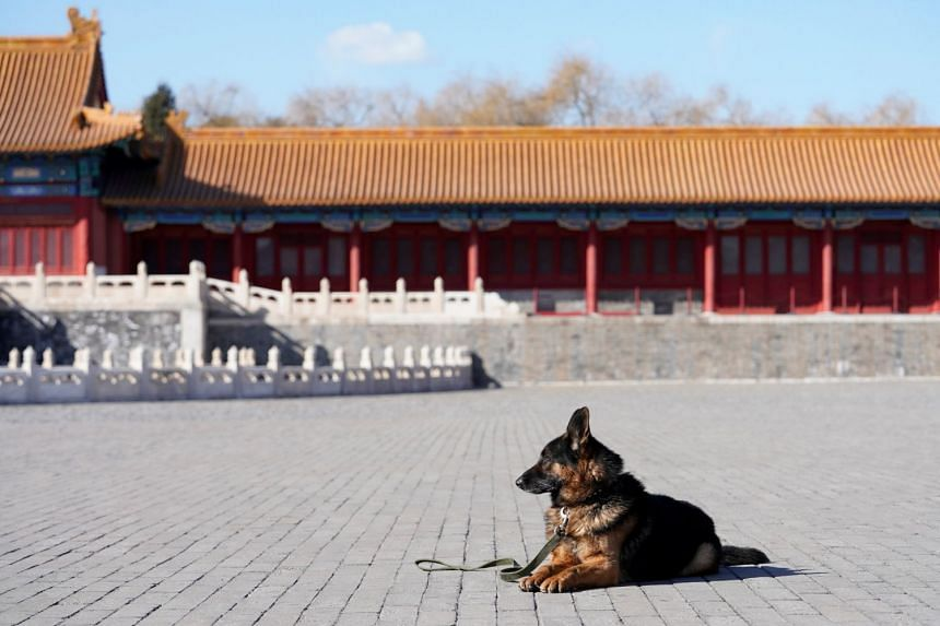 Working like a dog. One of the 23 furry members of the canine patrol guarding Beijing's Forbidden City. There's no holiday for them even as China welcomes the Year of the Dog.