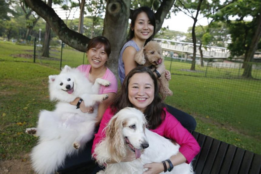 Members of The Straits Times Science and Environment team (clockwise from left) Samantha Boh, with her Japanese spitz Ash, Audrey Tan, with her toy poodle Snuffles, and Chang Ai-Lien, with her English cocker spaniel Amber, wish all their readers a ve