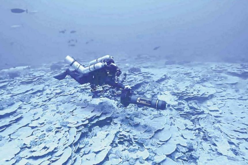 A diver explores the seabed of Benham Rise believed to be rich in marine resources and underwater minerals.