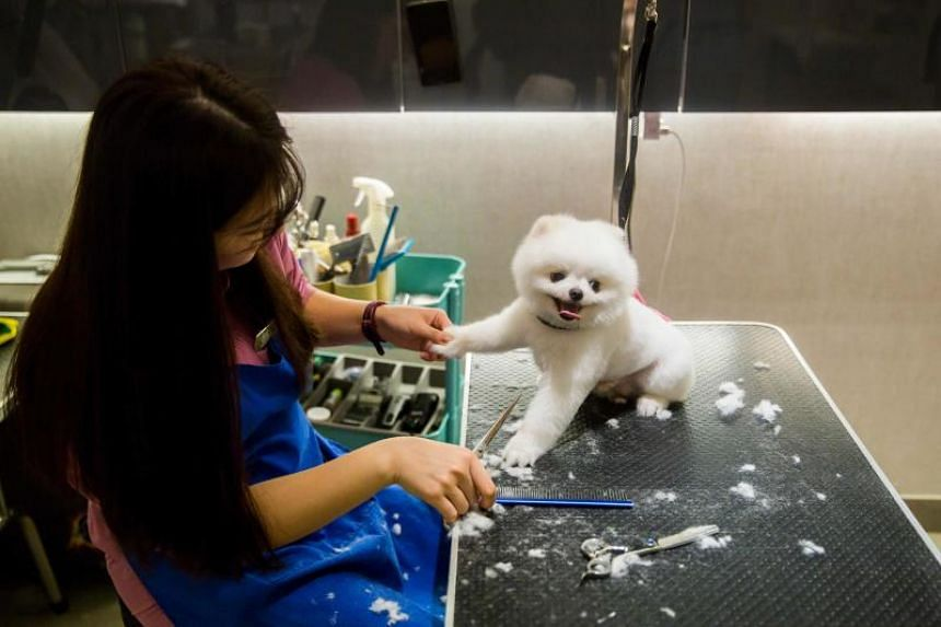 A dog gets a brushing and hair cut during a spa treatment session at a pet groomer in Hong Kong.