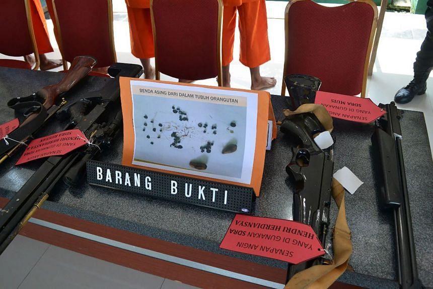 Police display evidence of weapons allegedly used by four Indonesian men while hunting and killing an orangutan in Kutai Timur on Feb 19, 2018.