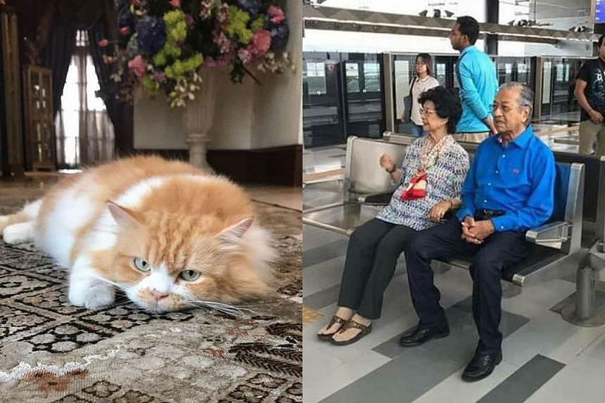 Malaysian Prime Minister Najib Razak got over 20,000 likes after posting a picture of his cat (left), while one of Tun Dr Mahathir Mohamad's most popular posts (right) shows him and his wife waiting for the MRT.