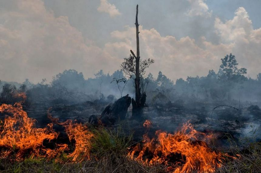 Smoke rises up from a peatland fire in Pekanbaru, Riau on Feb 1, 2018. It is one of 73 detected hotspots causing haze on the island of Sumatra.
