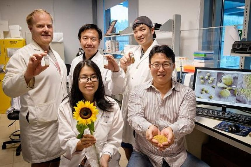 (Clockwise from left) Researchers Michael Potroz, Ferhan Abdul Rahim and Jae Park, Associate Professor Cho Nam Joon and master's student Tan Ee Lin. Mr Potroz and Mr Ferhan are holding bottles containing pollen grains which have the materials within