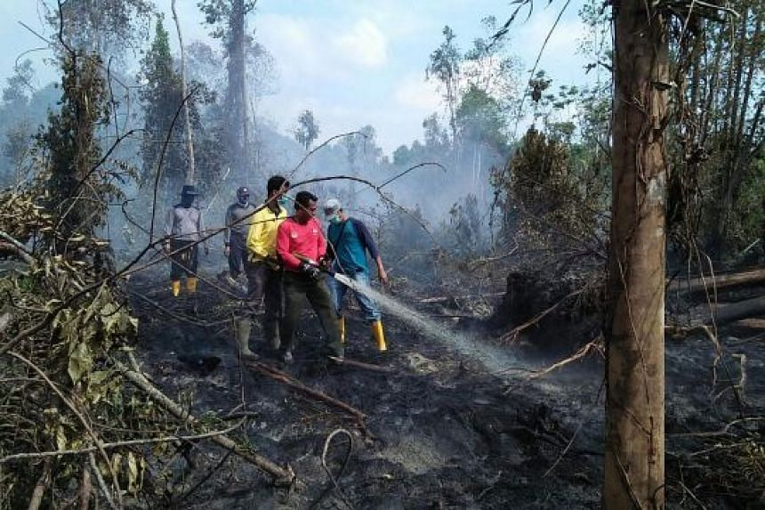 BNPB officials putting out a peatland forest fire near Taluk, Riau province, on Tuesday. The disaster alert status means the government can step in more easily to fight forest fires.