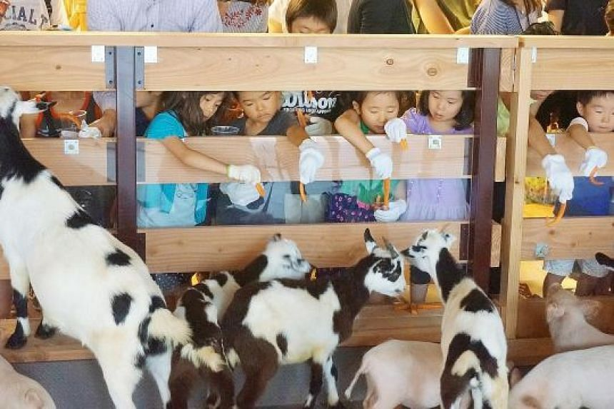 Children feeding goats at the Otemachi Bokujyo, a farm located on the 13th floor of a gleaming skyscraper in the heart of Tokyo's Otemachi business district.