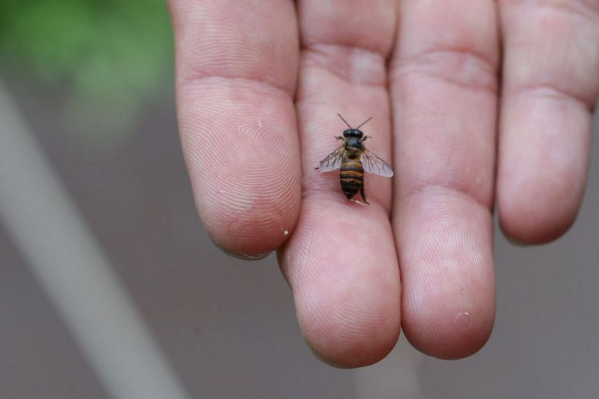 Two major field studies found some negative effects after exposure to neonicotinoids in wild and honeybee populations, and also some positives, depending on the environmental context.