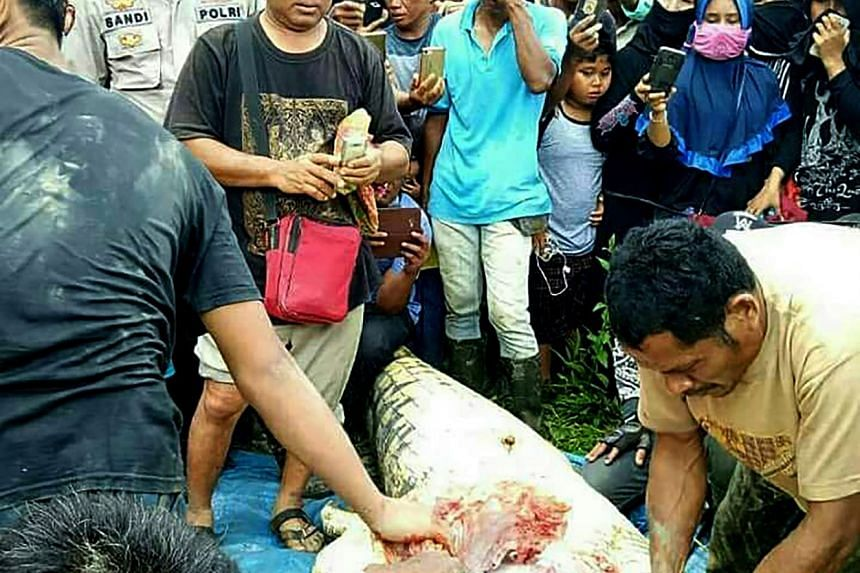 Indonesian authorities cut open the crocodile after they shot and killed the 6m-long creature.