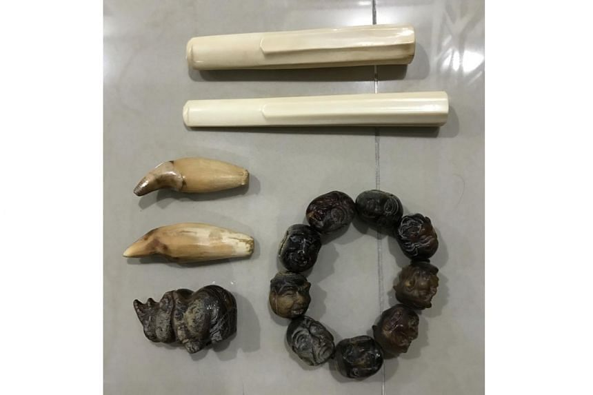 A 57-year-old man was caught attempting to sell one Rhino horn bracelet, one Rhino horn figurine and two black bear teeth. Two ivory cigarette holders were also uncovered in his flat.