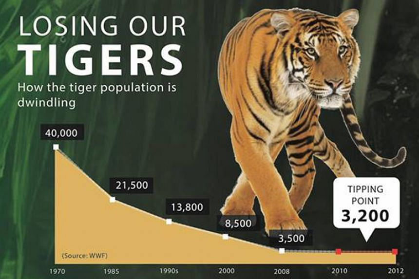 According to the World Wide Fund For Nature, there are only an estimated 3,900 tigers left in the wild in areas like Russia and Indonesia.