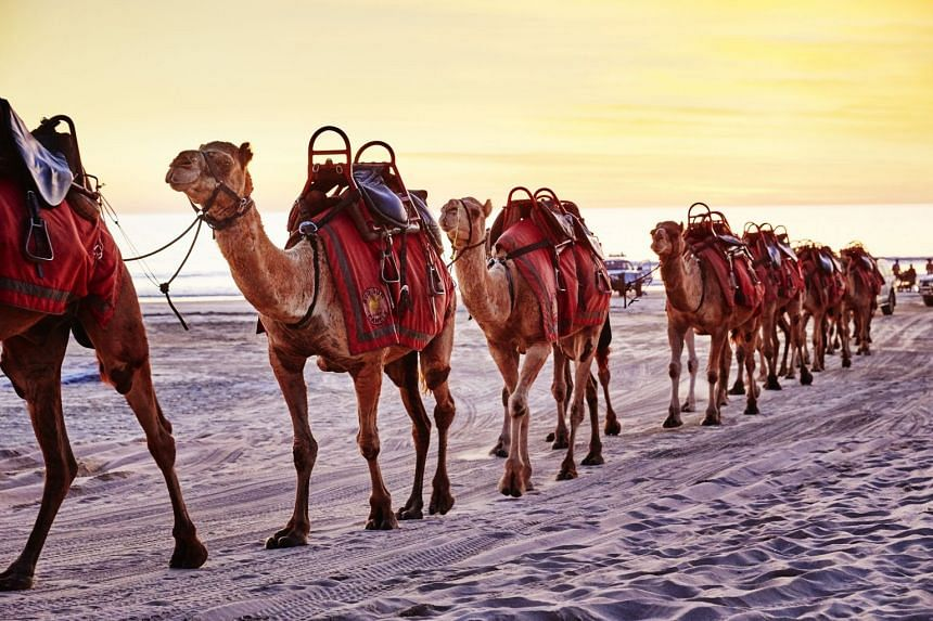 Go on a camel ride on Cable Beach in Broome, Western Australia.