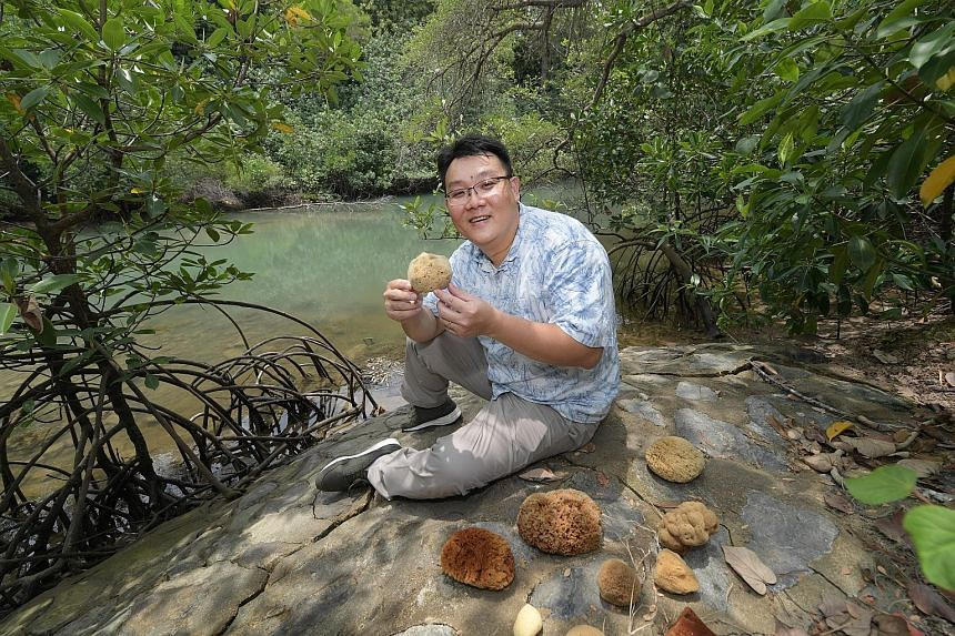 Mr Lim Swee Cheng from the National University of Singapore's Tropical Marine Science Institute wants people to come forward with their stories of collecting or using sea sponges here, as part of his research into the economic, historical and cultura