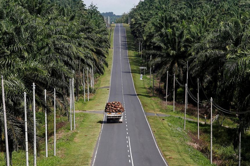 A truck carrying oil palm fruits passes through Felda Sahabat plantation in Sabah.