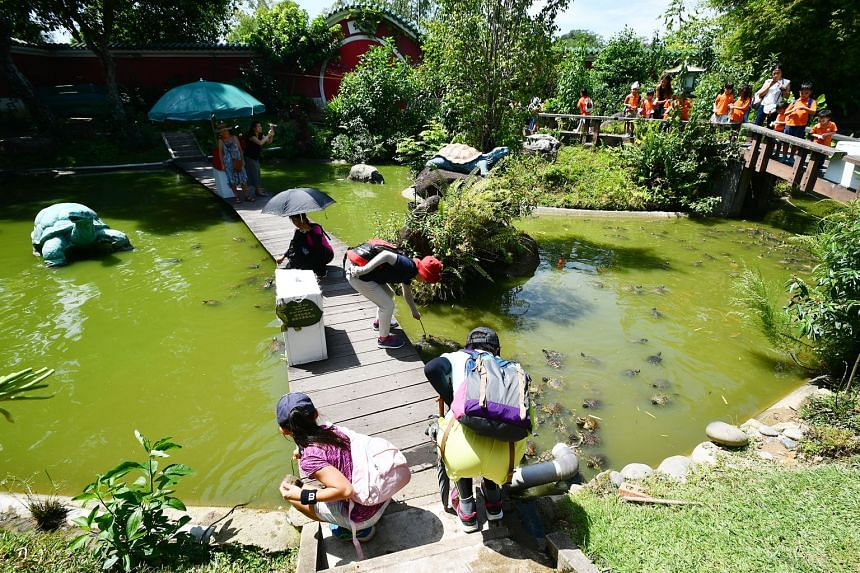 The outdoor pond in the Live Turtle and Tortoise Museum in the Chinese Garden. The museum must move by March 31 when its lease expires. Owner Connie Tan turned to Prime Minister Lee Hsien Loong via a Facebook post after appeals to various agencies fa