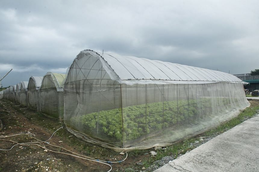 Singapore imports more than 90 per cent of its food, but the 200 food farms here help to buffer the nation against global supply disruptions due to factors such as climate change.