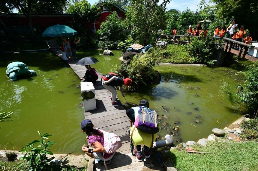 The Live Turtle and Tortoise Museum, which will have to vacate its premises in Chinese Garden next year when its lease expires in March 2018.