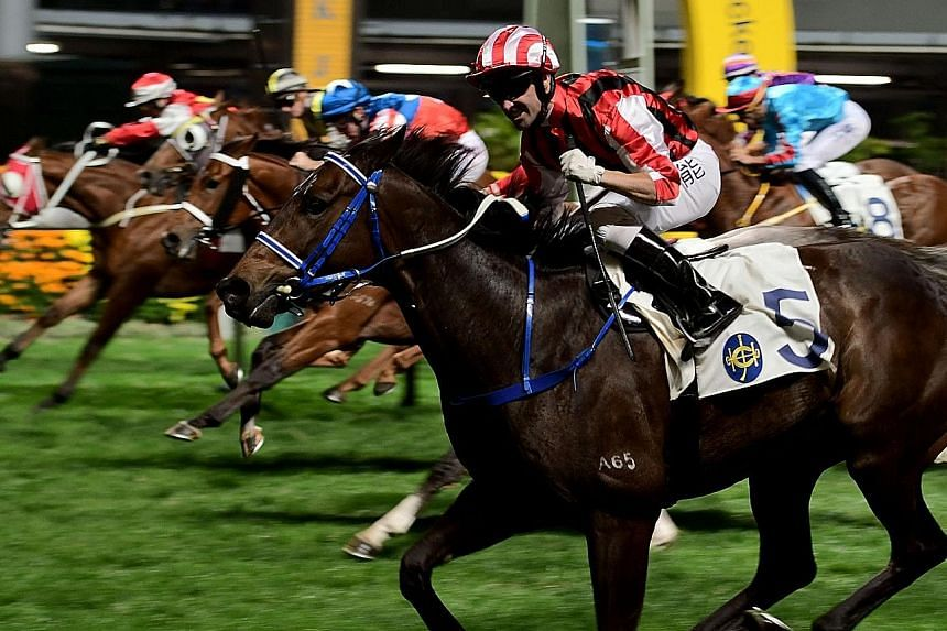 Sangria (foreground) is a live hope in the last race at Sha Tin tomorrow. He has drawn well and has no weight on his back.