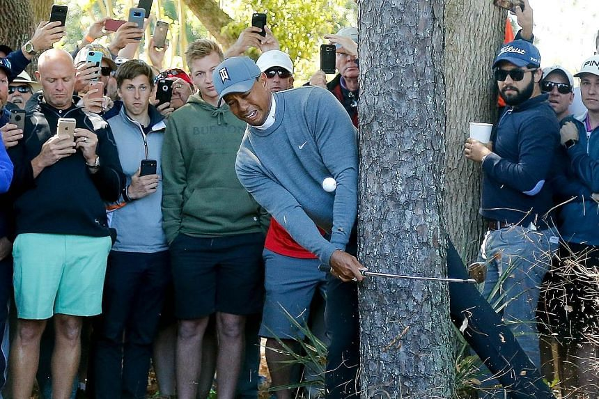 Tiger Woods plays his second shot on the par-four 16h during the first round of the Valspar Championship on Thursday in Palm Harbour, Florida. He subsequently wrapped his iron around the trunk, with the club bending before flying out of his hand as h